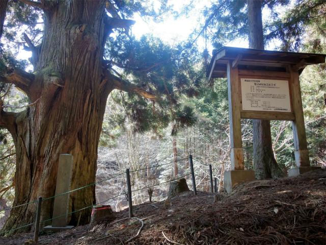 笹子雁ヶ腹摺山(吉田口~笹子峠周回)登山口コースガイド 矢立の杉【登山口ナビ】