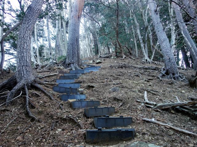 大山(地獄沢橋~大山北尾根)登山口コースガイド 階段の急登【登山口ナビ】