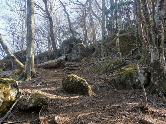 大山(地獄沢橋~大山北尾根)登山口コースガイド 苔むした岩【登山口ナビ】