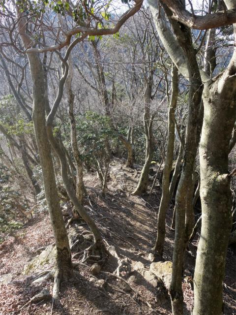 大山(地獄沢橋~大山北尾根)登山口コースガイド 露岩【登山口ナビ】