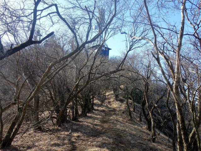 大山(地獄沢橋~大山北尾根)登山口コースガイド 山頂直下【登山口ナビ】