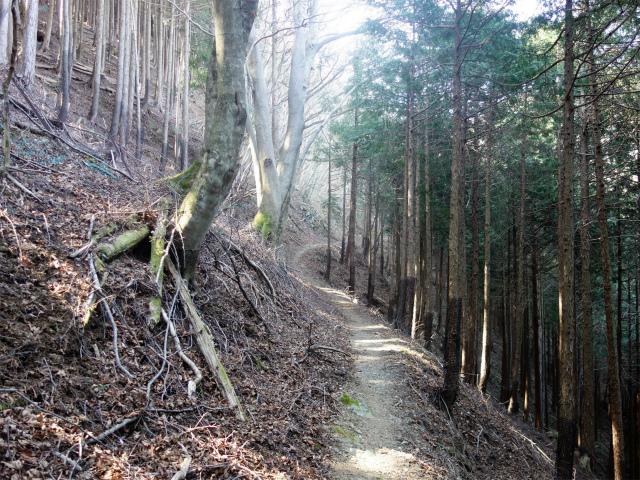 塔ノ岳(札掛~長尾尾根) 登山口コースガイド【登山口ナビ】