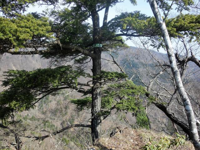 鬼ヶ岳(淵坂峠~毛無山~十二ヶ岳)登山口コースガイド 九ヶ岳山頂【登山口ナビ】