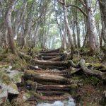 黒金山(徳和~乾徳山)登山口コースガイド 山頂直下【登山口ナビ】
