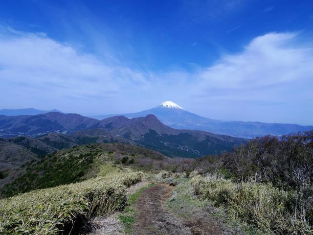 明神ヶ岳(二宮金次郎柴刈り路~金時山)稜線からの富士山【登山口コースガイド】
