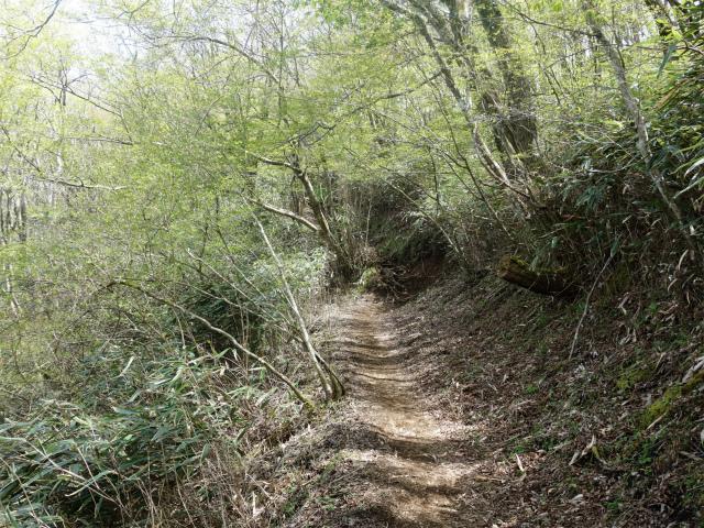 明神ヶ岳(金時見晴パーキング・火打石岳)巻き道【登山口コースガイド】