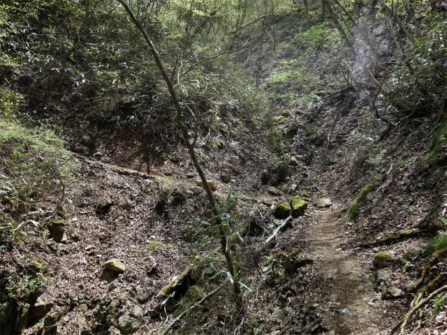明神ヶ岳(金時見晴パーキング・火打石岳)トラバース【登山口コースガイド】