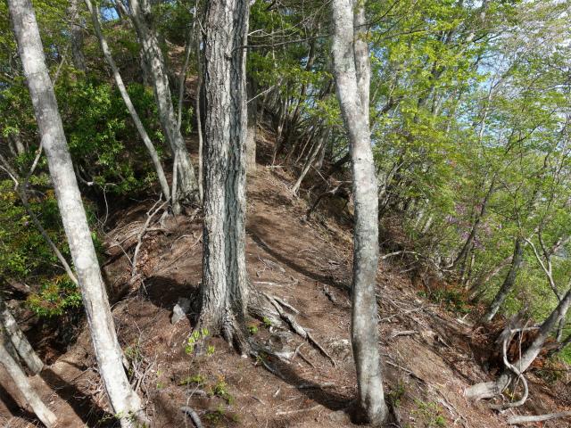 両神山(天理岳~天武将尾根) 登山口コースガイド ツツジの多い稜線【登山口ナビ】