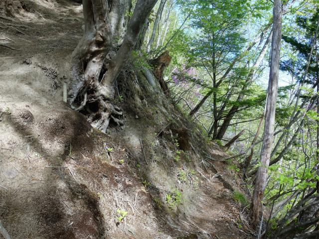 両神山(天理岳~天武将尾根) 登山口コースガイド 巻き道【登山口ナビ】