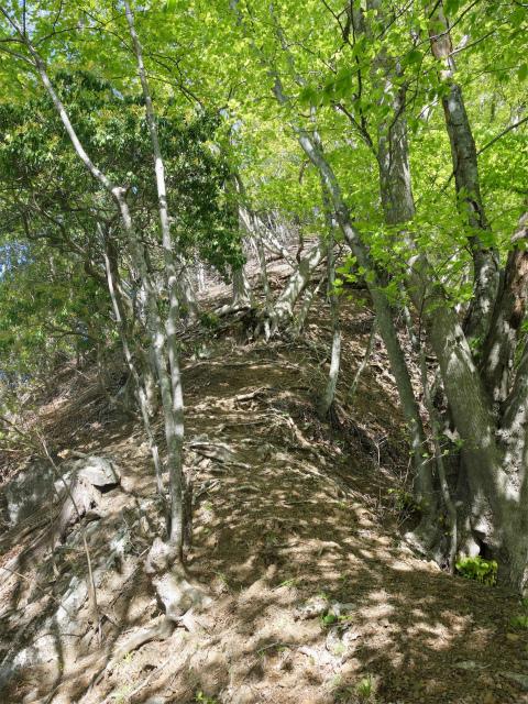 両神山(天理岳~天武将尾根) 登山口コースガイド 1083.9m峰【登山口ナビ】