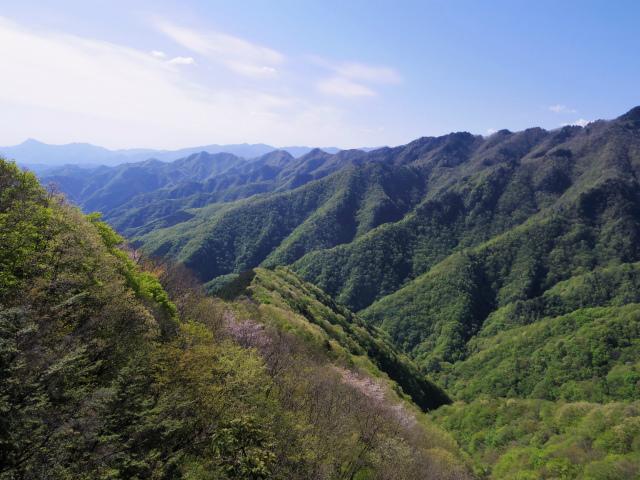 両神山(天理岳~天武将尾根) 登山口コースガイド 辺見岳稜線【登山口ナビ】