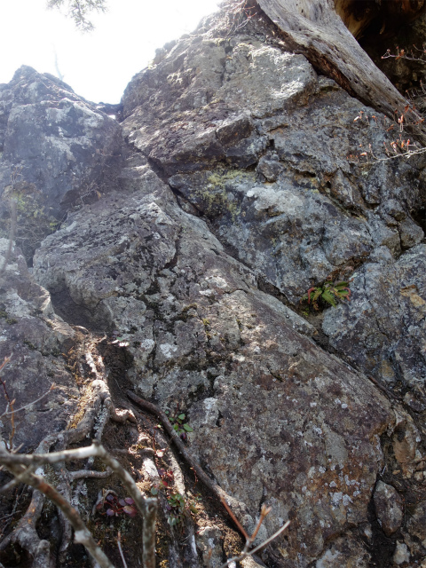 両神山(天理岳~天武将尾根) 登山口コースガイド 岩場【登山口ナビ】