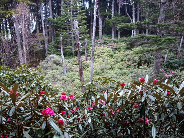 十文字峠・十文字山(毛木平コース)乙女の森【登山口ナビ】