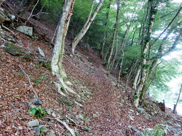 飛龍山(大常木林道~岩岳尾根)登山口コースガイド 取り付き【登山口ナビ】