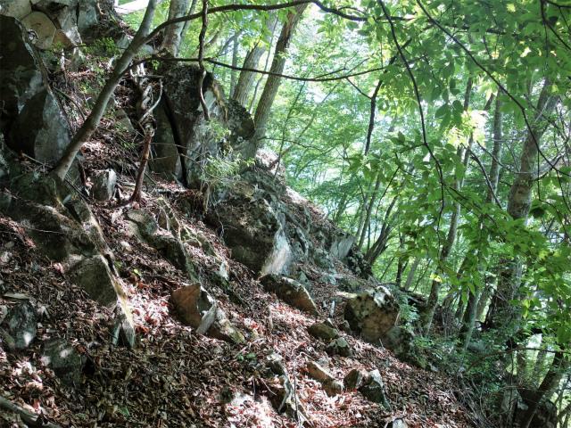 飛龍山(大常木林道~岩岳尾根)登山口コースガイド 露岩【登山口ナビ】