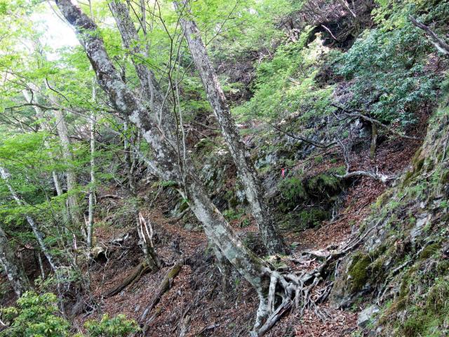 飛龍山(大常木林道~岩岳尾根)登山口コースガイド トラバース【登山口ナビ】