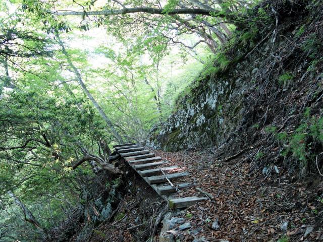飛龍山(大常木林道~岩岳尾根)登山口コースガイド 古い木橋【登山口ナビ】