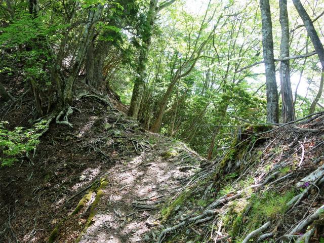 飛龍山(大常木林道~岩岳尾根)登山口コースガイド 左トラバース【登山口ナビ】