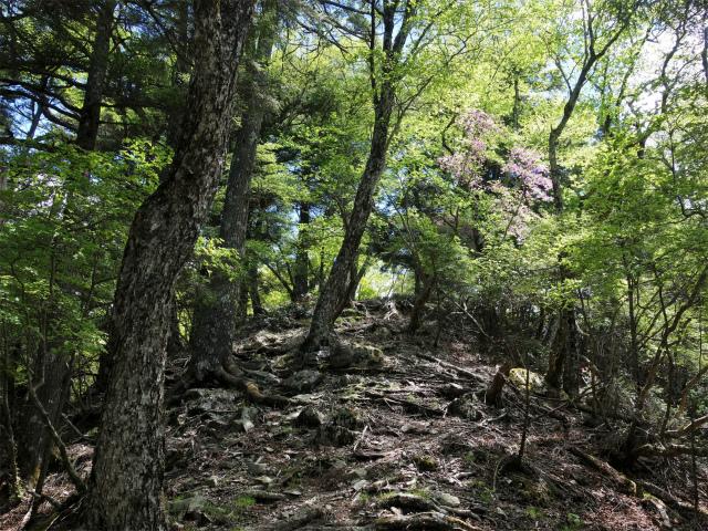 飛龍山(大常木林道~岩岳尾根)登山口コースガイド ツツジ【登山口ナビ】