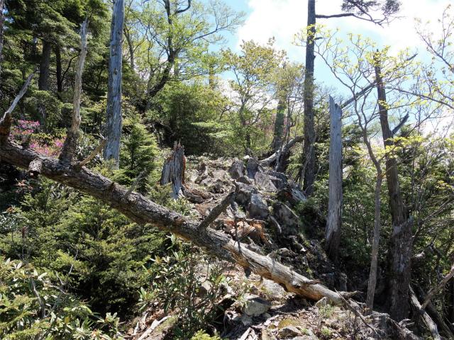 飛龍山(大常木林道~岩岳尾根)登山口コースガイド 登り返し【登山口ナビ】