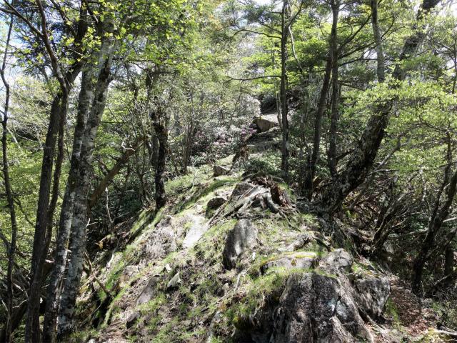 飛龍山(大常木林道~岩岳尾根)登山口コースガイド 前飛龍手前のピーク【登山口ナビ】
