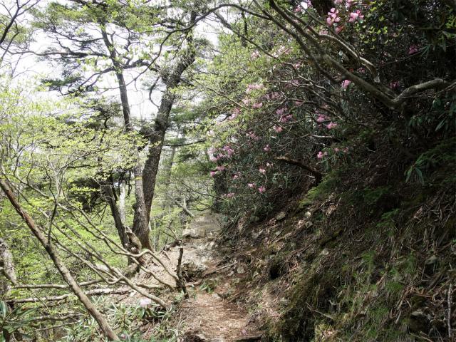 飛龍山(サオラ峠~ミサカ尾根)登山口コースガイド シャクナゲの尾根【登山口ナビ】