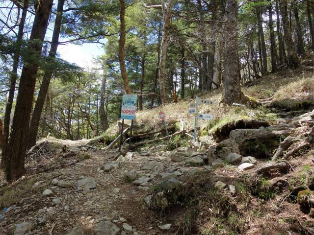 飛龍山(サオラ峠~ミサカ尾根)登山口コースガイド 奥秩父主脈縦走路分岐【登山口ナビ】