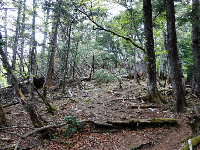 飛龍山(サオラ峠~ミサカ尾根)登山口コースガイド 倒木【登山口ナビ】