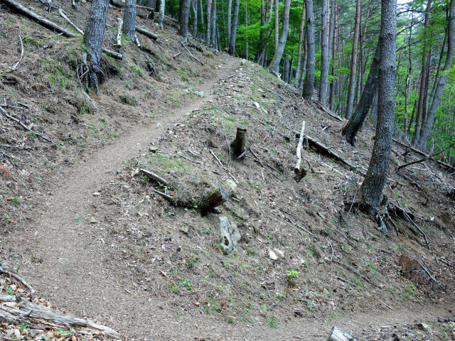 飛龍山(サオラ峠~ミサカ尾根)登山口コースガイド 折り返しの登山道【登山口ナビ】
