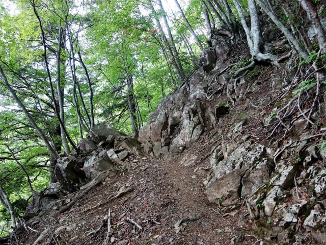 飛龍山(サオラ峠~ミサカ尾根)登山口コースガイド 岩【登山口ナビ】