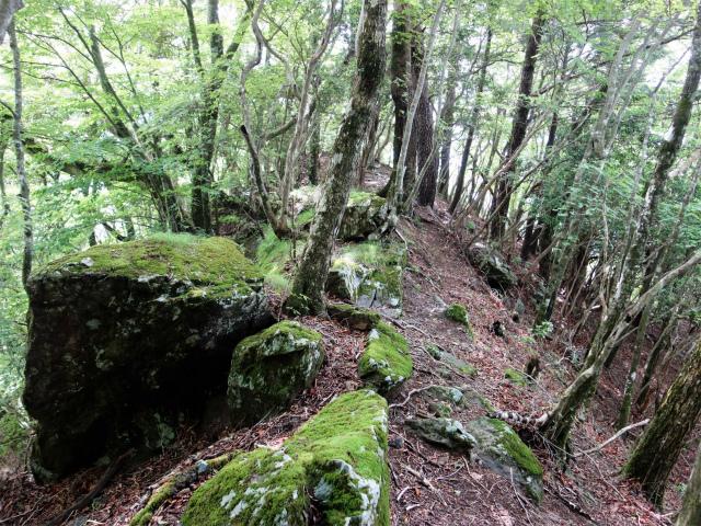 雁ヶ腹摺山(大樺ノ頭~楢ノ木尾根)登山口コースガイド 苔むした岩【登山口ナビ