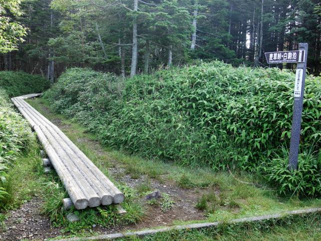 八ヶ岳・中山(麦草峠~白駒池周回)登山口コースガイド 遊歩道【登山口ナビ】