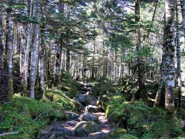 八ヶ岳・中山(麦草峠~白駒池周回)登山口コースガイド 丸山【登山口ナビ】