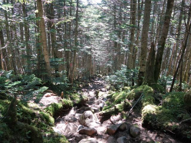 八ヶ岳・中山(麦草峠~白駒池周回)登山口コースガイド 丸山直下の急坂【登山口ナビ】