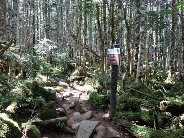 八ヶ岳・中山(麦草峠~白駒池周回)登山口コースガイド オコジョの森【登山口ナビ】