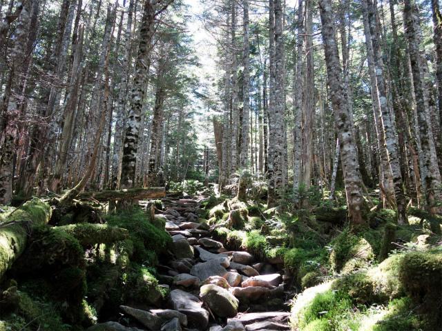 八ヶ岳・中山(麦草峠~白駒池周回)登山口コースガイド 岩の転がる登り坂【登山口ナビ】