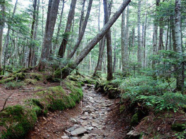 八ヶ岳・中山(麦草峠~白駒池周回)登山口コースガイド【登山口ナビ】
