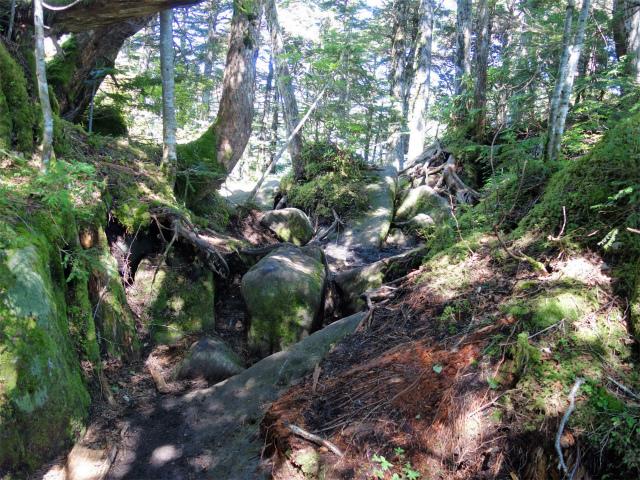 八ヶ岳・中山/ニュウ(麦草峠~白駒池周回)登山口コースガイド 巨石【登山口ナビ】