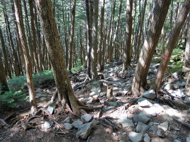 八ヶ岳・中山/ニュウ(麦草峠~白駒池周回)登山口コースガイド【登山口ナビ】