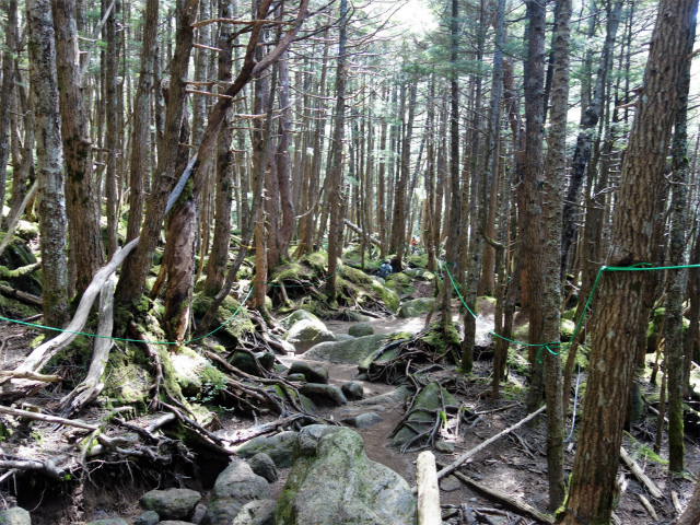 八ヶ岳・中山/ニュウ(麦草峠~白駒池周回)登山口コースガイド にゅうの森【登山口ナビ】