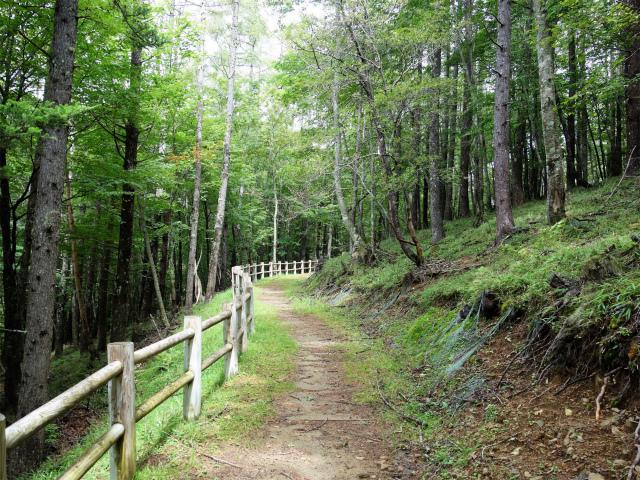櫛形山(池の茶屋林道口~アヤメ平周回)登山口コースガイド トレッキングコース【登山口ナビ】