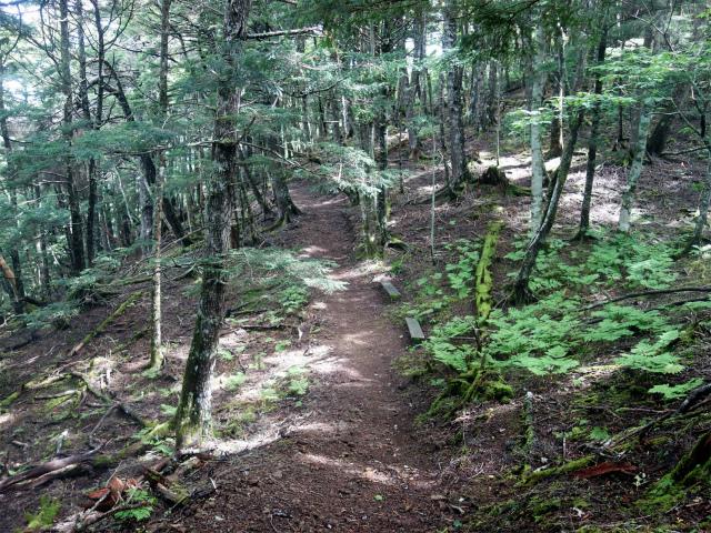 櫛形山(池の茶屋林道口~アヤメ平周回)登山口コースガイド トレッキングコース【登山口ナビ