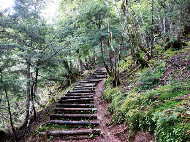 櫛形山(池の茶屋林道口~アヤメ平周回)登山口コースガイド 階段【登山口ナビ】
