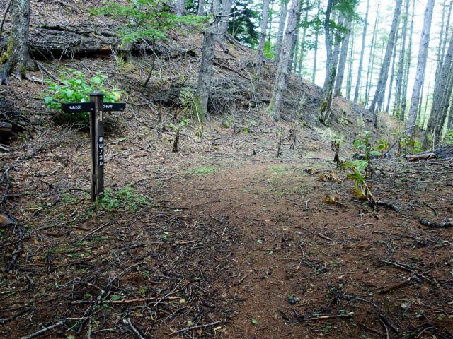 櫛形山(池の茶屋林道口~アヤメ平周回)登山口コースガイド 裸山のコル【登山口ナビ】