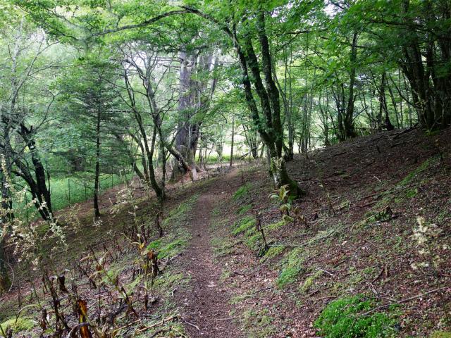 櫛形山(池の茶屋林道口~アヤメ平周回)登山口コースガイド 植生保護柵【登山口ナビ】