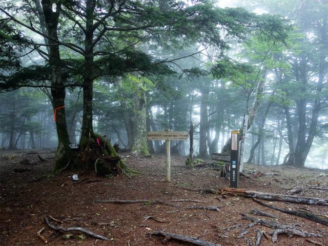 櫛形山(池の茶屋林道口~アヤメ平周回)登山口コースガイド 櫛形山山頂標のピーク【登山口ナビ】
