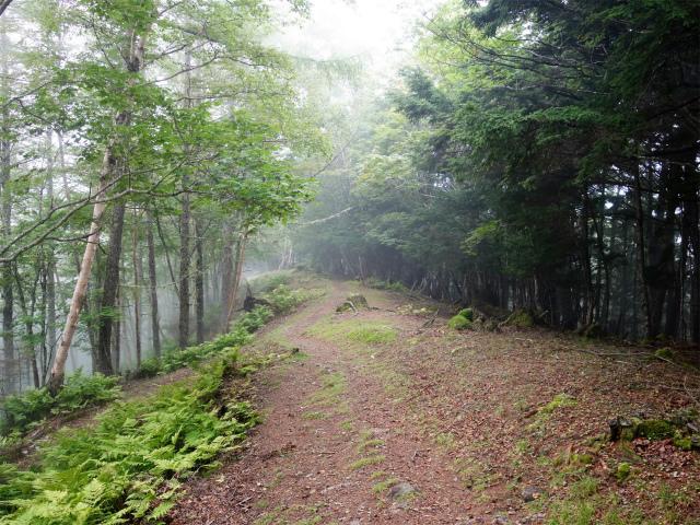 櫛形山(池の茶屋林道口~アヤメ平周回)登山口コースガイド【登山口ナビ】