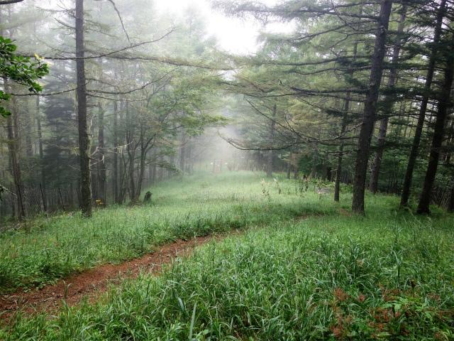 櫛形山(池の茶屋林道口~アヤメ平周回)登山口コースガイド ゲート じぐざぐの急斜面【登山口ナビ】
