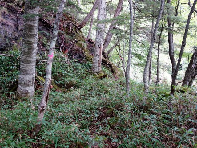 八ヶ岳・赤岳(地獄谷~ツルネ東陵)登山口コースガイド 大岩の高巻き【登山口ナビ】