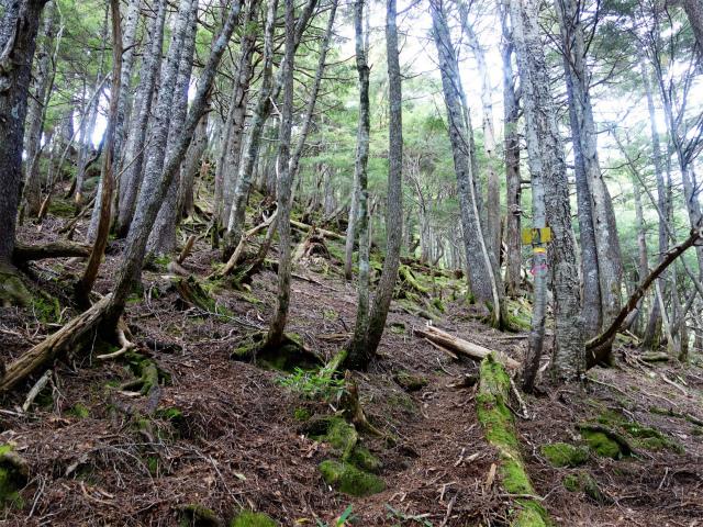八ヶ岳・赤岳(地獄谷~ツルネ東陵)登山口コースガイド 古い指導標【登山口ナビ】